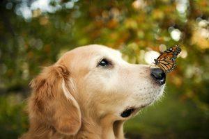 pictures of super cute animals