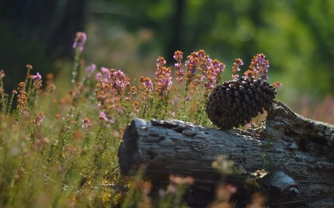 pine pictures amazing