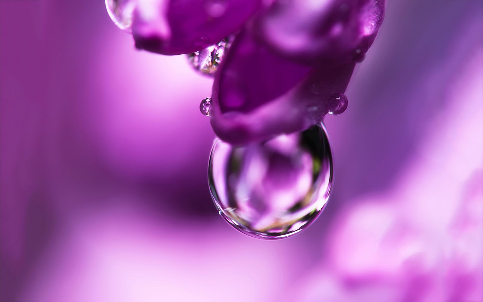pink flower water drop