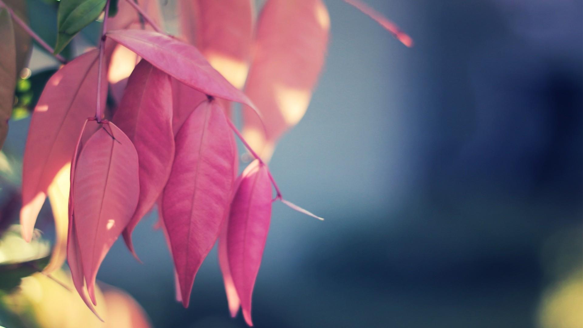 pink leaves download