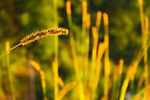 plant wallpaper 1080p