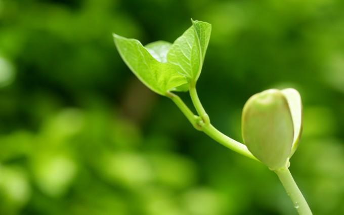 plant wallpaper hd