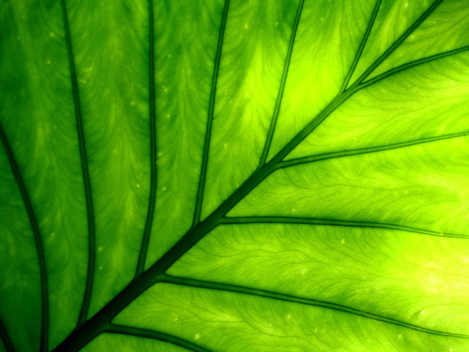 plant wallpaper leaf