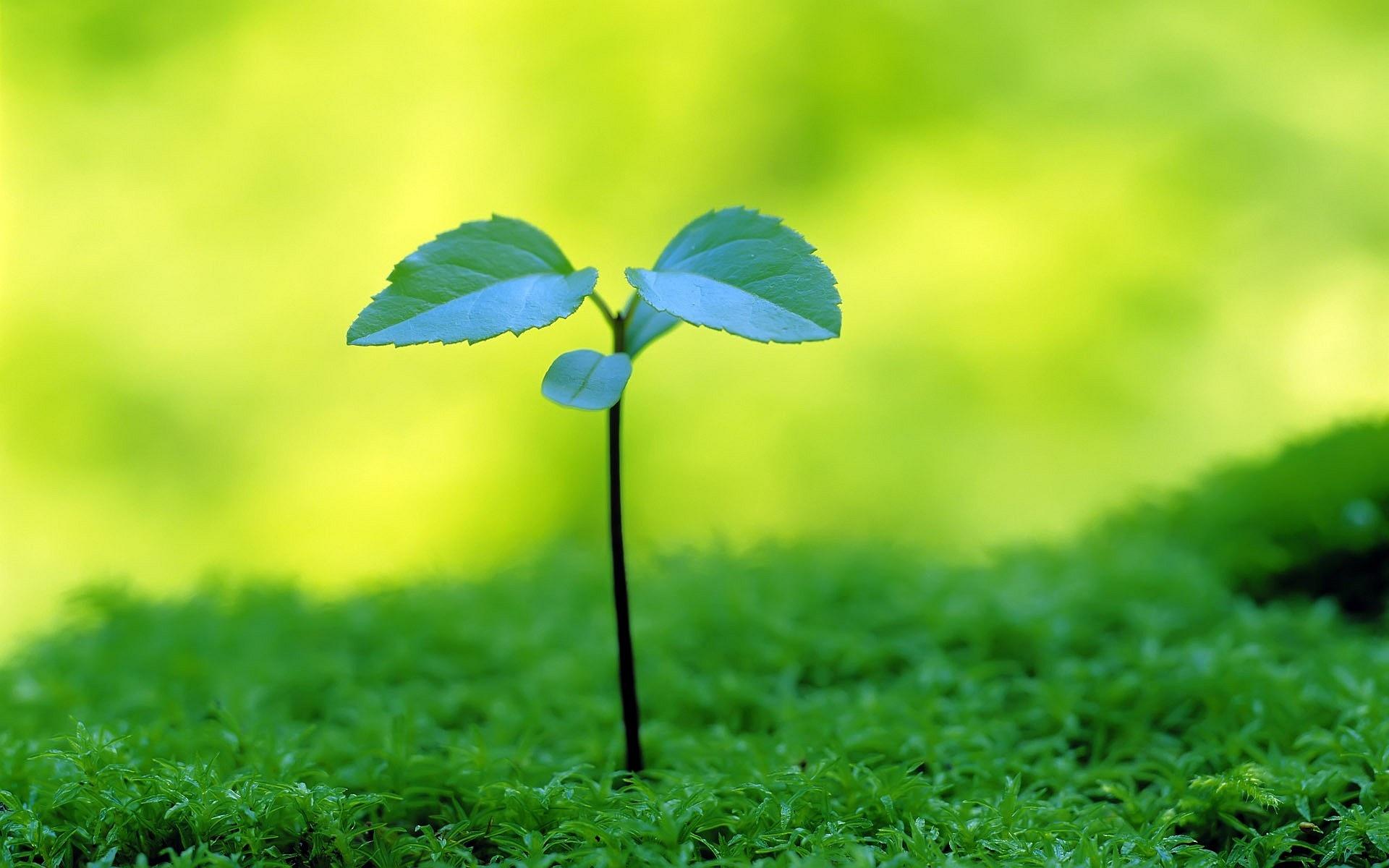 sedum plant hd wallpaper - photo #32