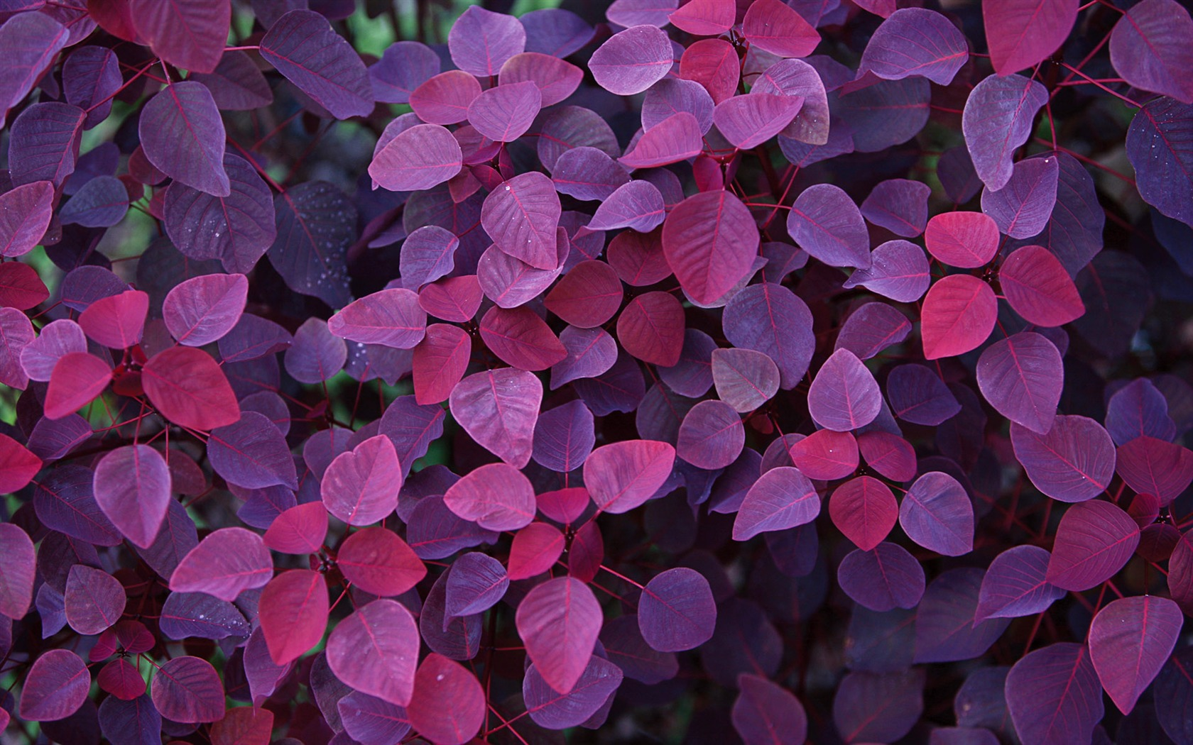 plant wallpaper purple