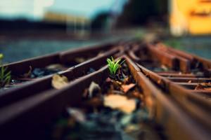 plant wallpaper railway rails
