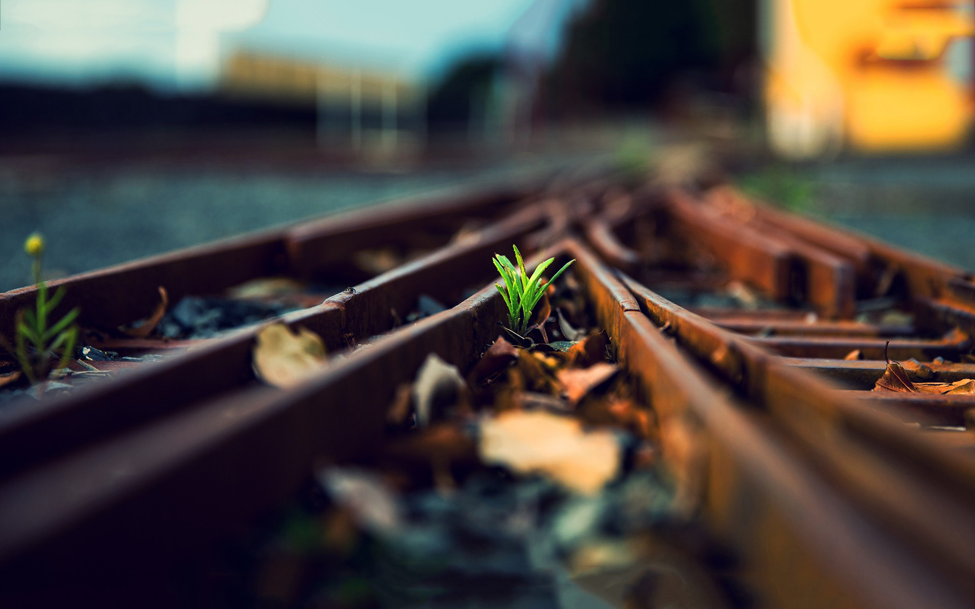 plant wallpaper railway rails