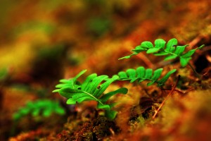plants wallpaper forest