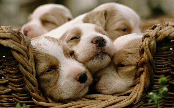 puppies cute