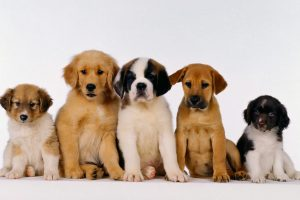 puppies wallpaper desktop