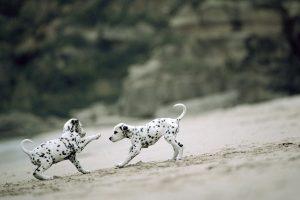 puppies wallpaper download