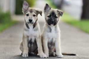 puppies wallpaper lovely