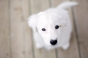 puppies wallpapers A3