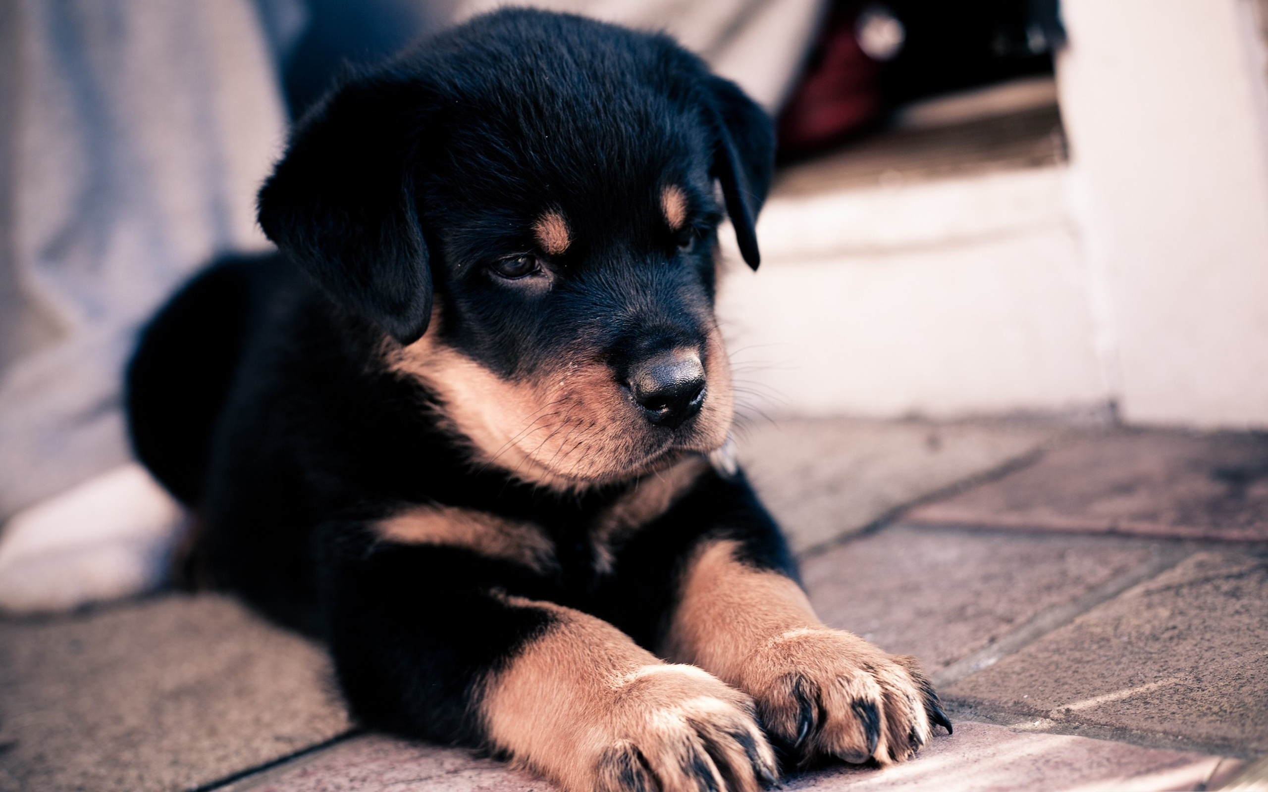 puppies wallpapers A5