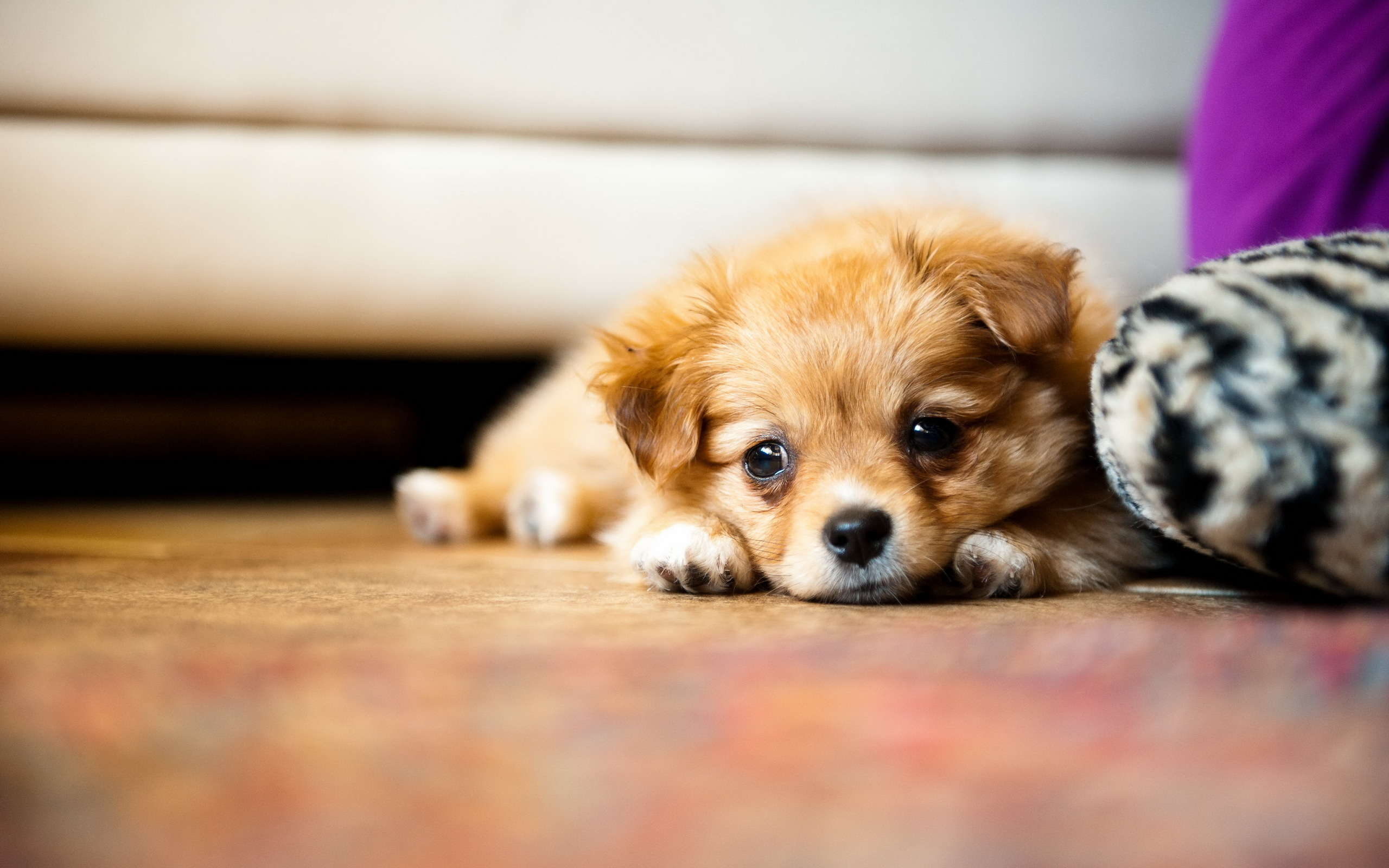 puppies wallpapers A8