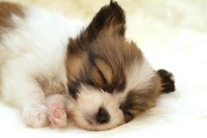 puppies wallpapers for desktop