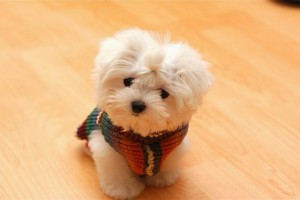 puppy dogs wallpapers