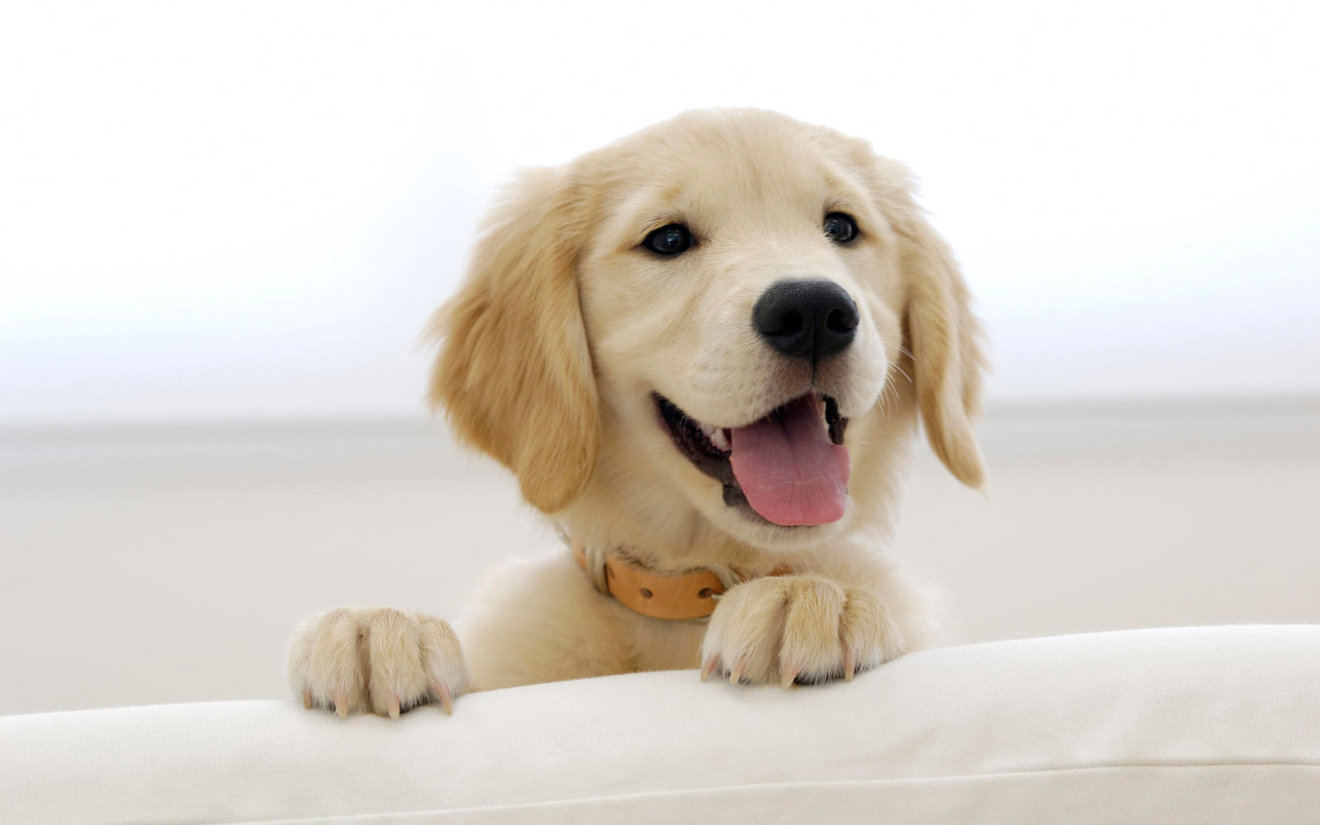 puppy wallpapers A1