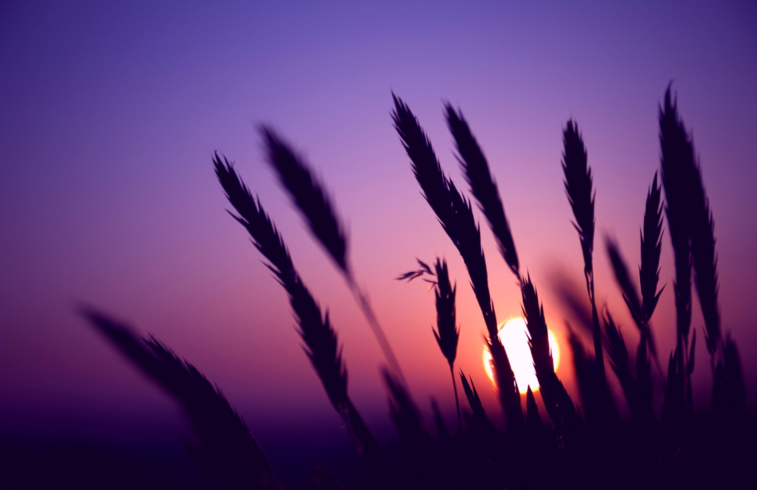 purple sunset wallpaper hd
