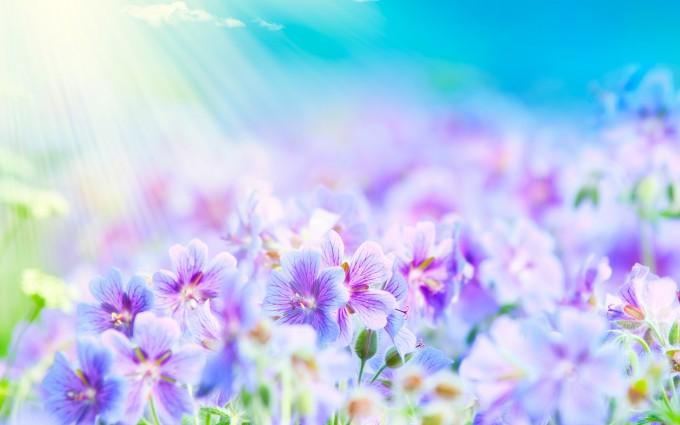 purple white flower
