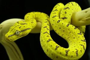 python wallpaper hd