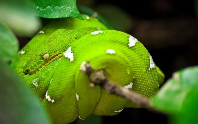 python wallpapers