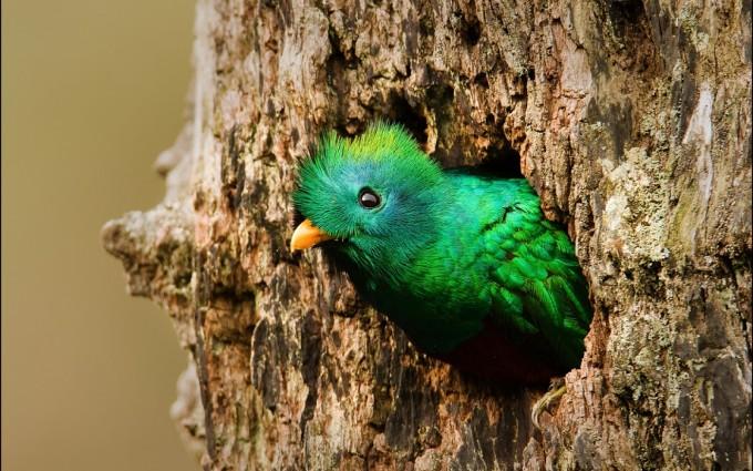 quetzal backgrounds