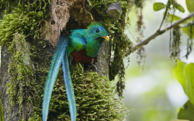 quetzal wallpapers