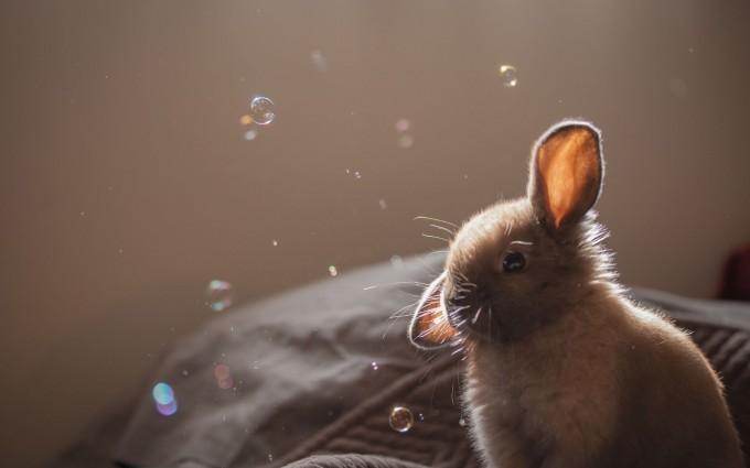 rabbit funny wallpapers