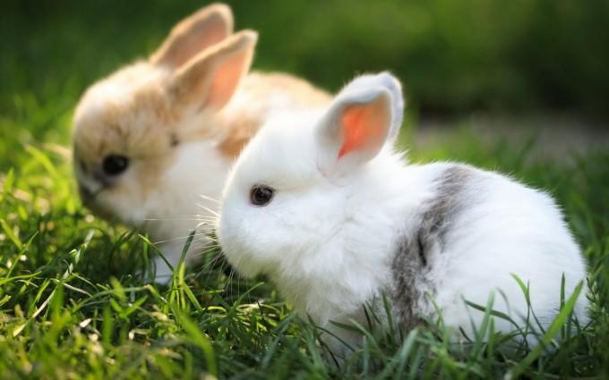 rabbit hd images