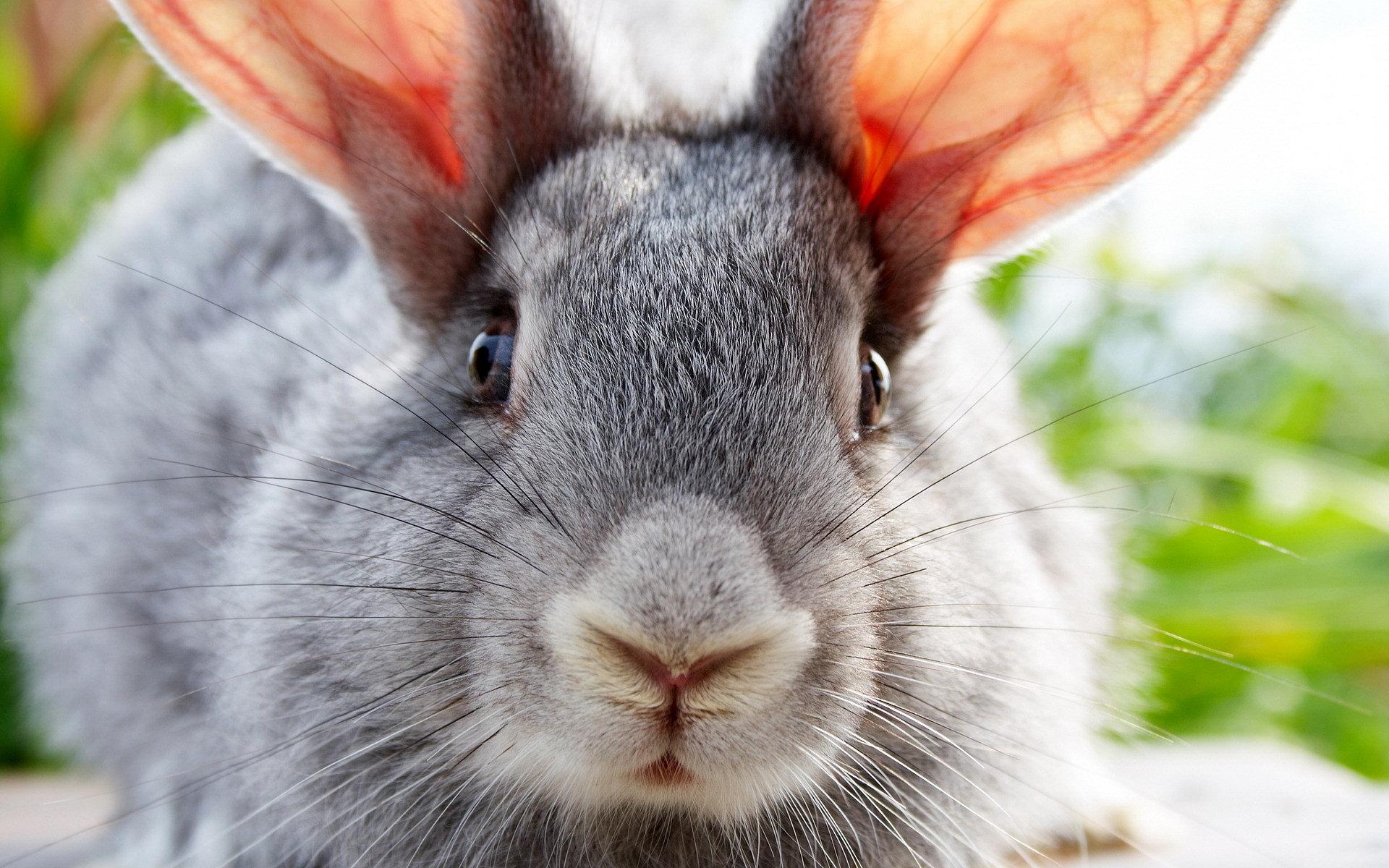 rabbit hd photo