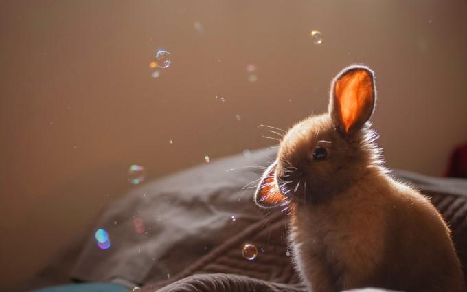 rabbit hd wallpaper