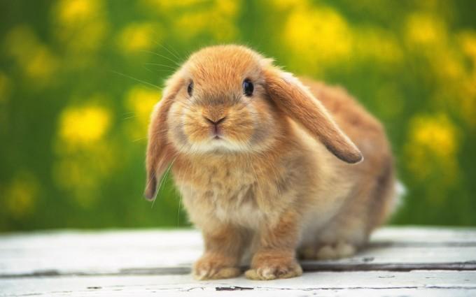 rabbit images free