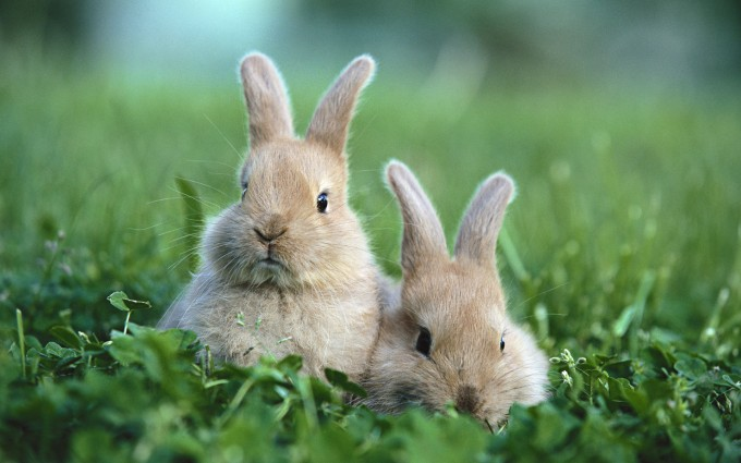 rabbit images free download