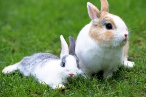 rabbit pictures