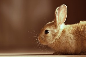 rabbit pictures hd