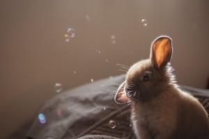 rabbit screensaver