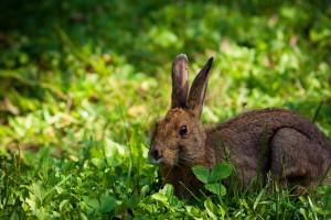 rabbit wallpaper for desktop