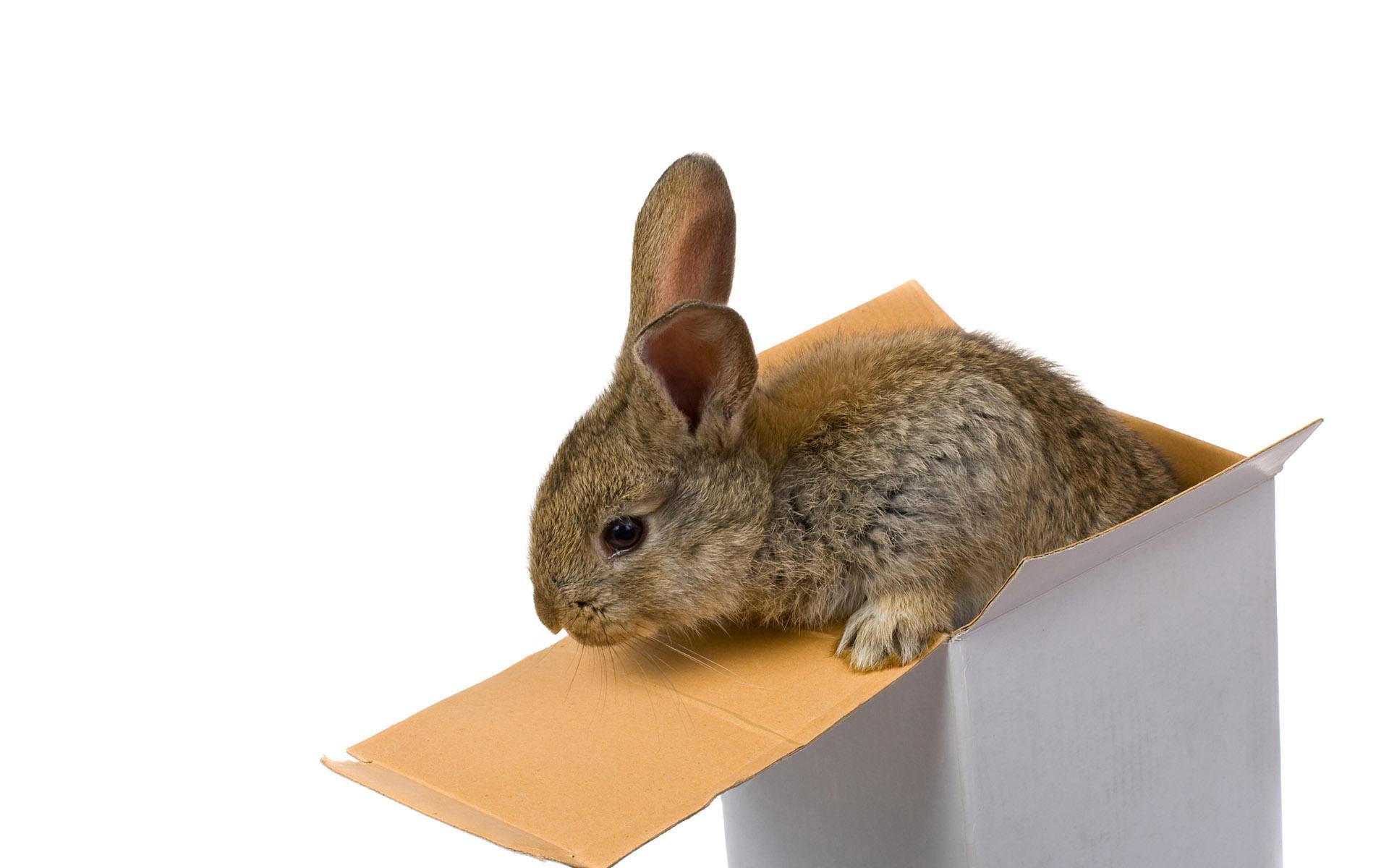 rabbit wallpapers free download