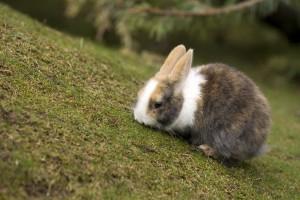 rabbits hd