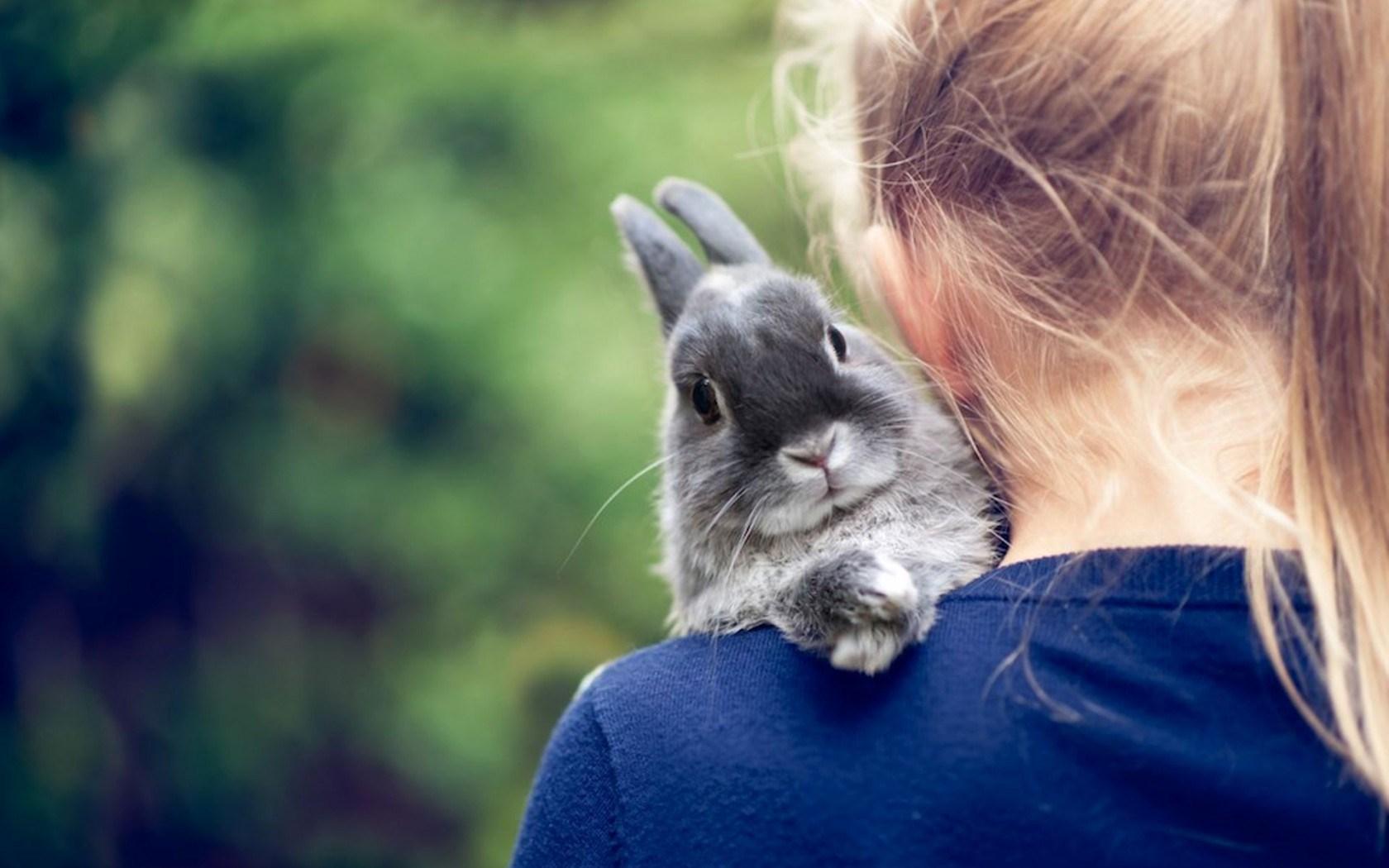 rabbits hd wallpaper