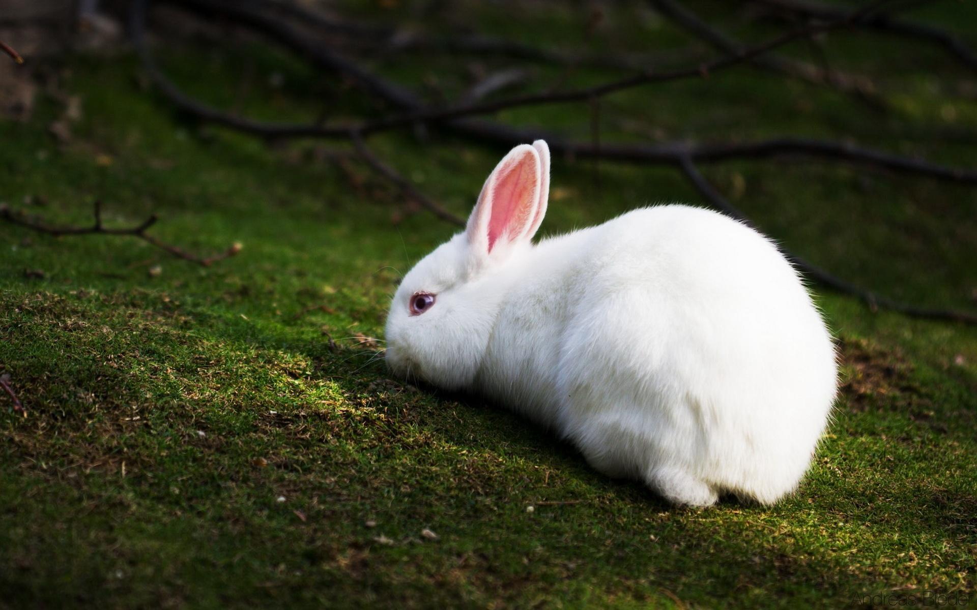 rabbits wallpapers desktop