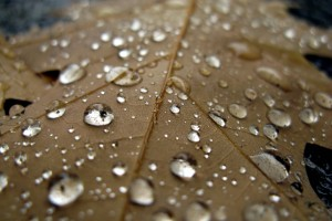 rain dew drops hd
