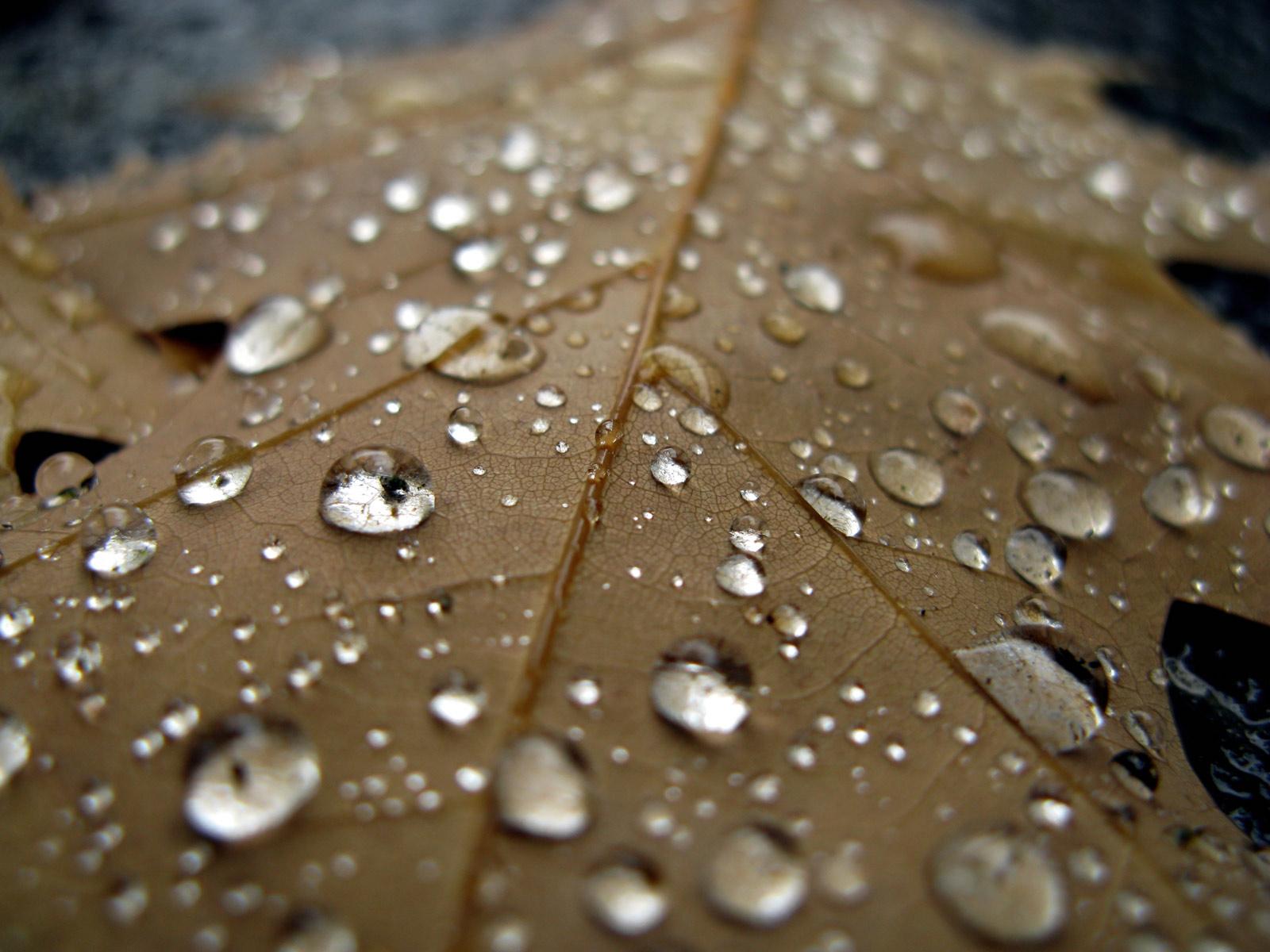 rain dew drops hd