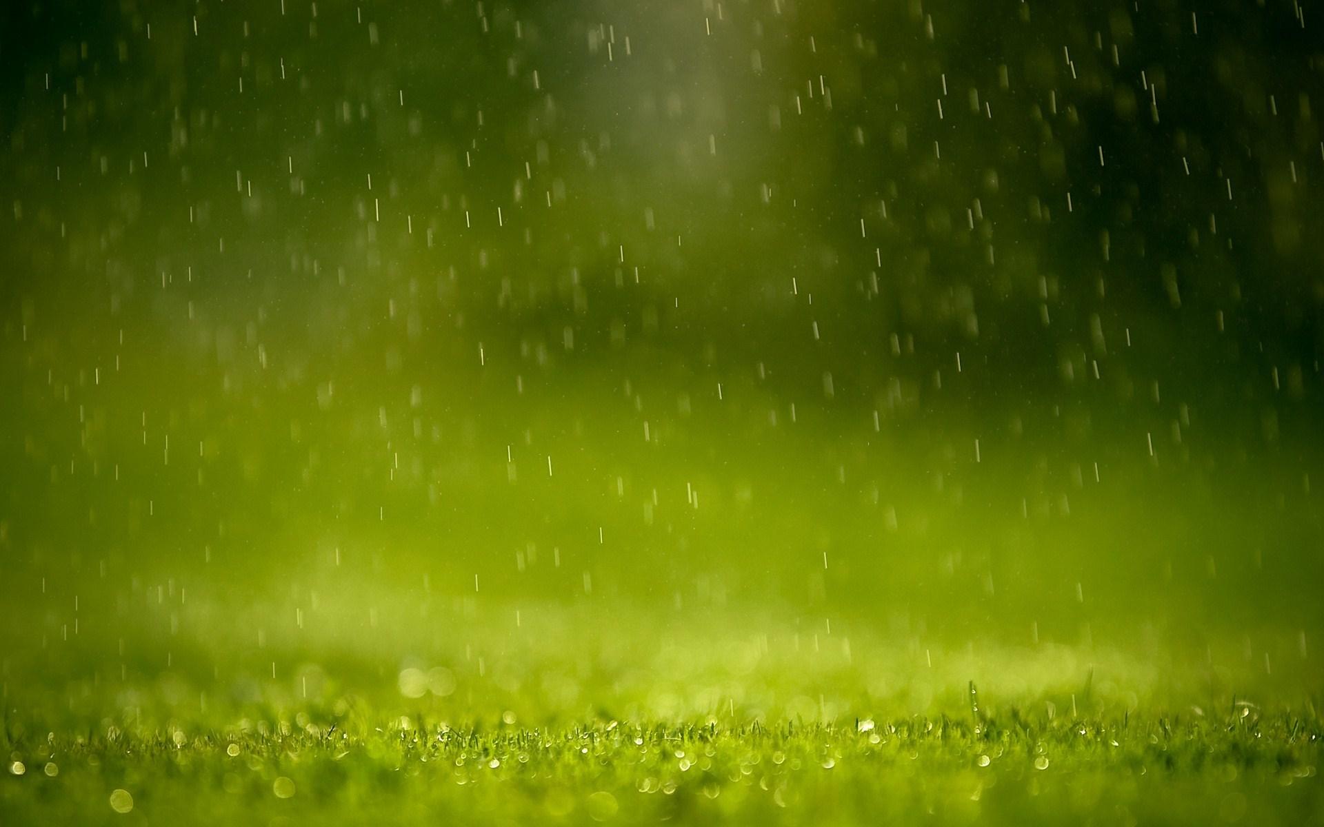 rain drops grass