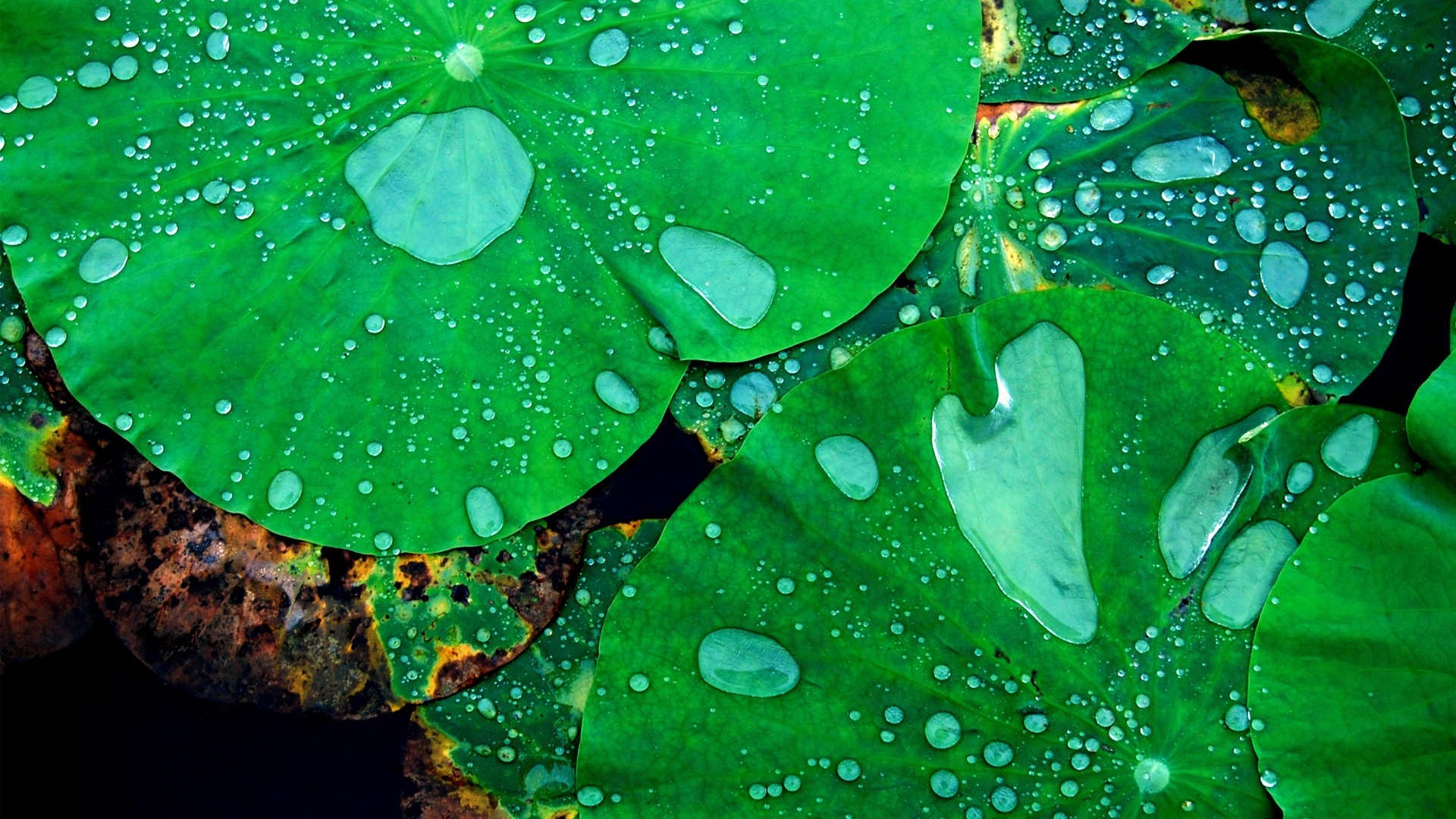 rain drops nature refreshing