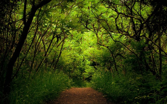 rain forest wallpapers path