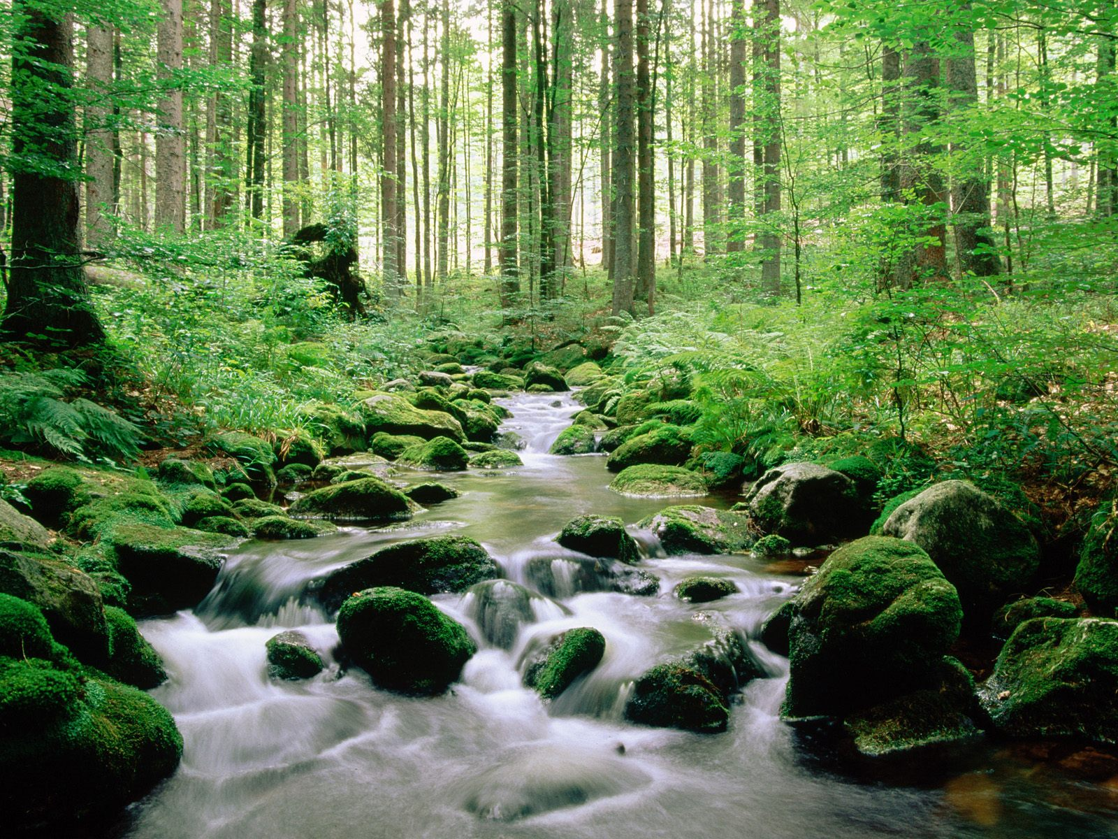 rain forest wallpapers stream