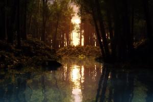 rain forest wallpapers sun