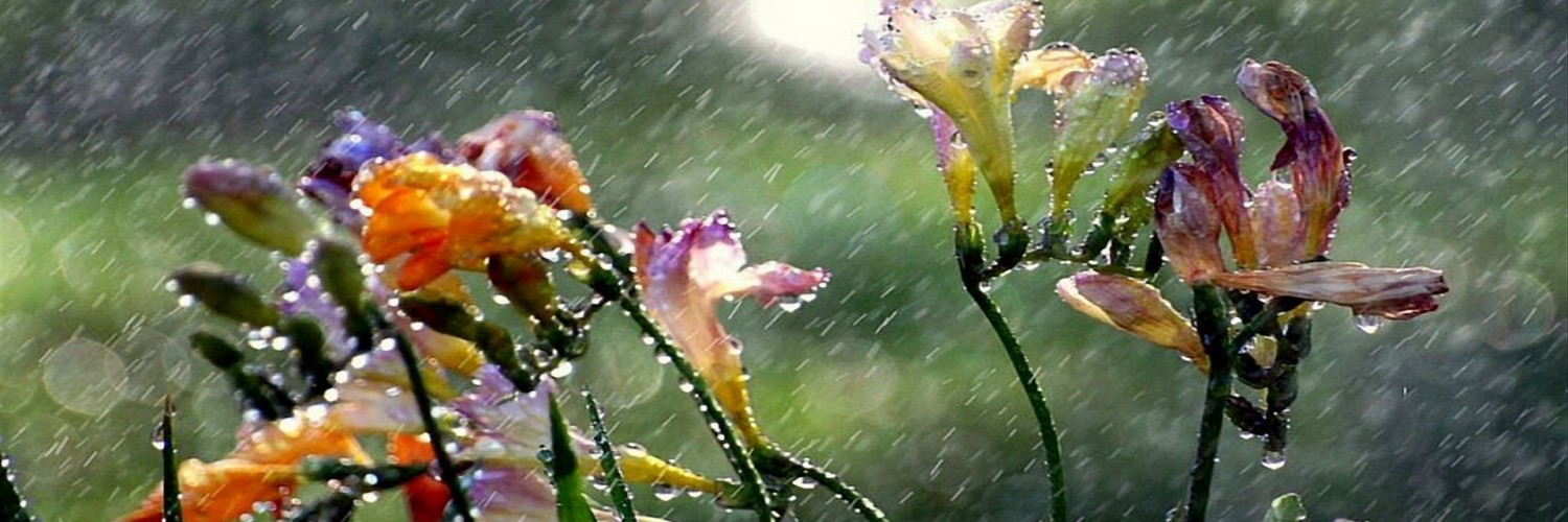 Rain wallpaper for facebook cover page